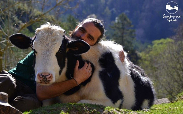 cows-love-cuddles